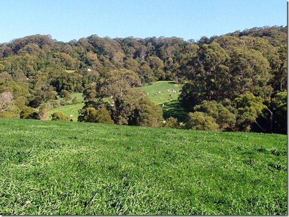Looking back from Easts to Cows in Yard Paddock 0011