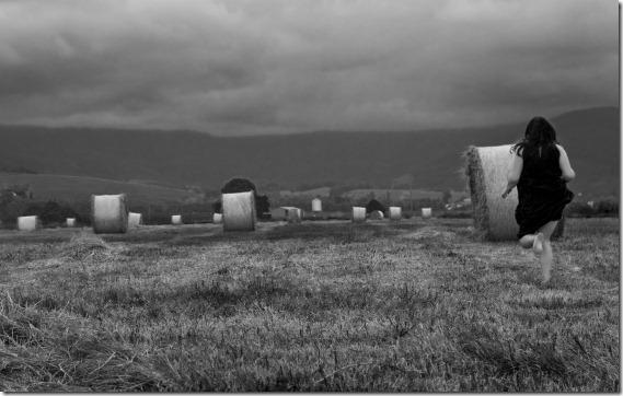 tilly in haystacks