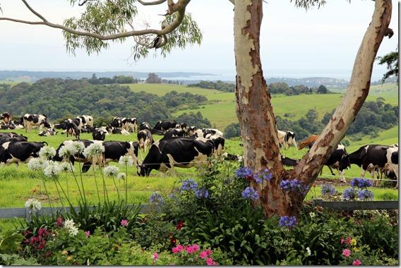 Clover Hill Dairies