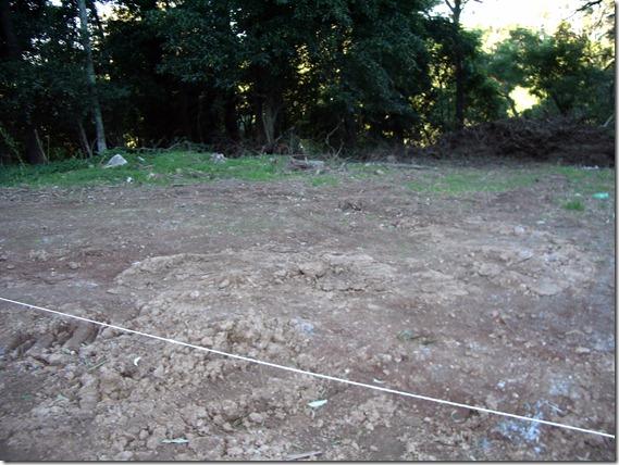 Picasso Cows Arboretum 07 Aug IMGP2068
