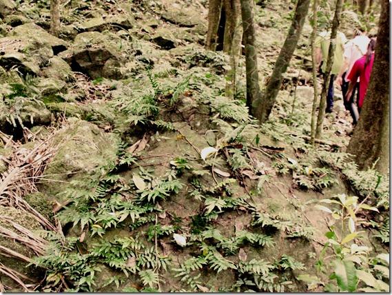 Clover Hill Rain Forest
