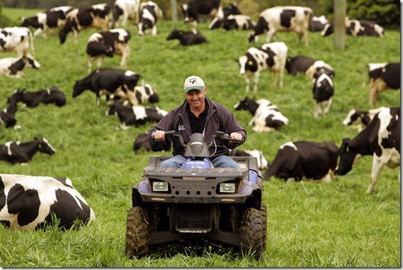 MERCURY.WEEKENDER. Pic taken at Clover Hill Dairies Jamberoo for Two page feature and history and future of Clover Hill Dairies ..pic of Michael Strong round up cows.pic by sylvia liber. 6 September 2006. job number 00065069 SPECIALX 00065069