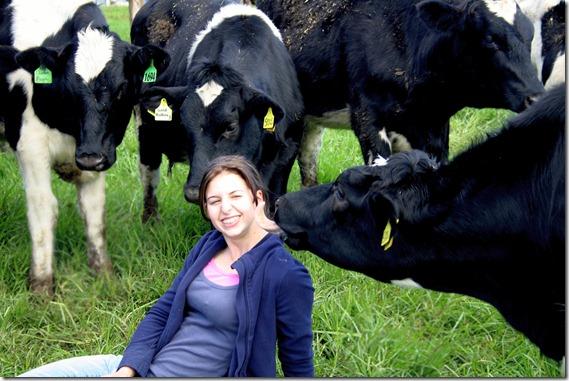 Emma and calves