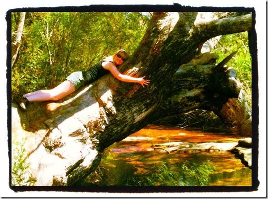 RNP tree hug