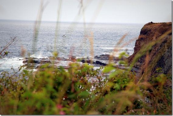 Kiama Coastal Walk  (5)