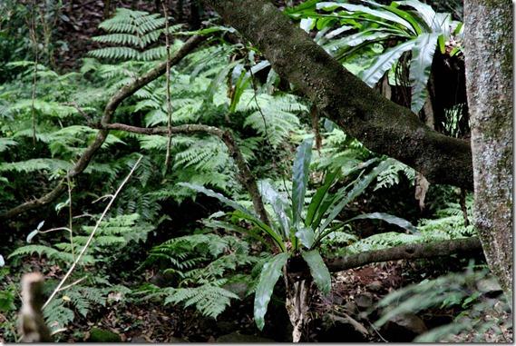Clover Hill Dairies Rainforest