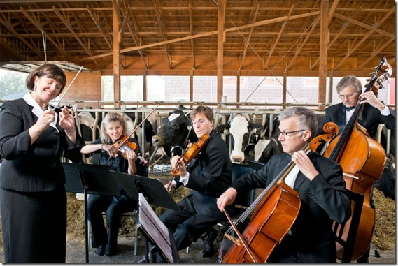 Music Dairy Cows