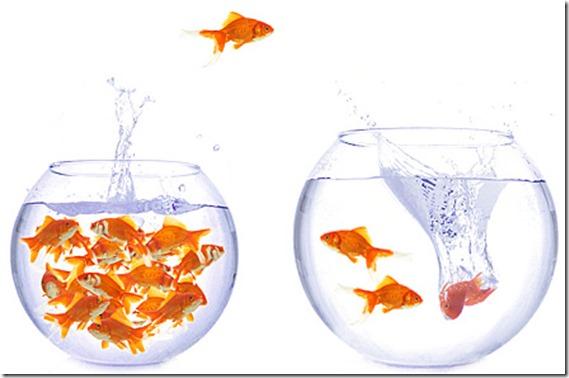 fishbowl (1)
