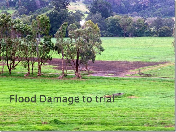 Trial pastures were very resilient  to adverse weather events events  (1)