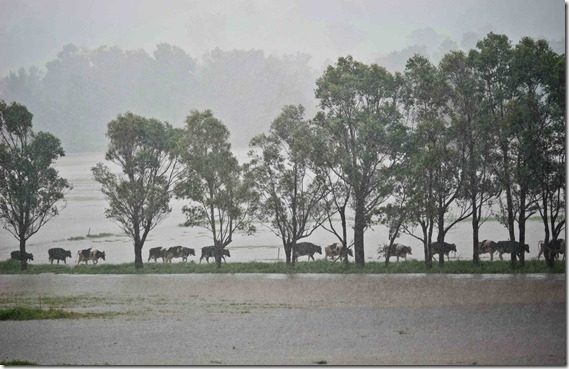 Trial pastures were very resilient  to adverse weather events events  (2)