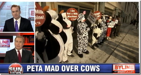 PETA Mad over cows