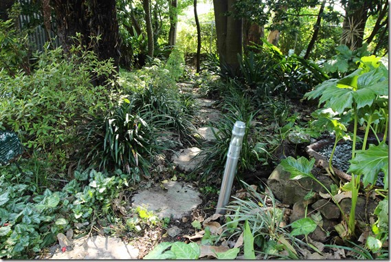 Rainforest garden
