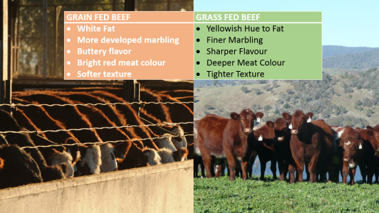 grass fed beef vs grain fed