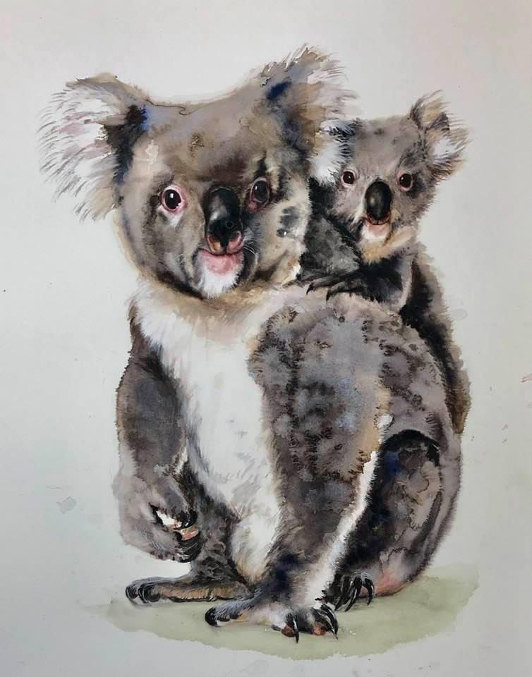 CHerry Hood Koalas.jpg